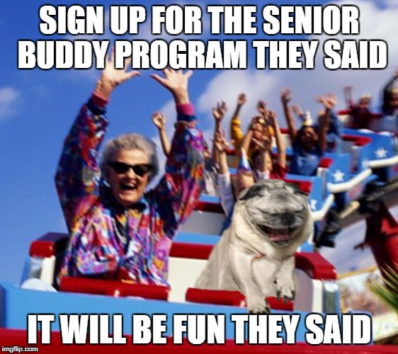 SIGN UP FOR THE SENIOR BUDDY PROGRAM THEY SAID IT WILL BE FUN THEY SAID | image tagged in pug coaster | made w/ Imgflip meme maker