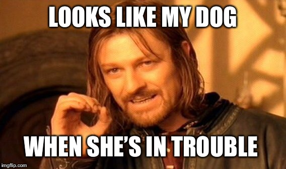 One Does Not Simply Meme | LOOKS LIKE MY DOG WHEN SHE'S IN TROUBLE | image tagged in memes,one does not simply | made w/ Imgflip meme maker