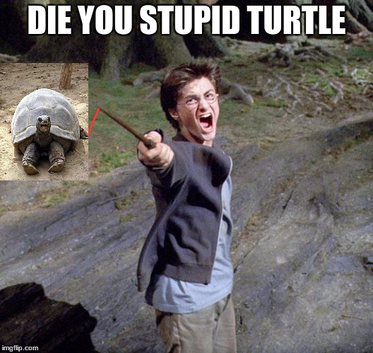 turtle | DIE YOU STUPID TURTLE | image tagged in harry potter | made w/ Imgflip meme maker