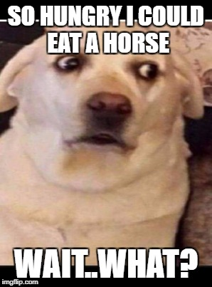 SO HUNGRY I COULD EAT A HORSE WAIT..WHAT? | made w/ Imgflip meme maker