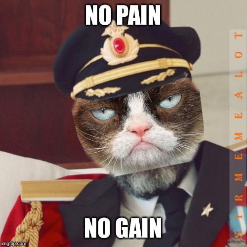 Cat-Pain Obvious | NO PAIN NO GAIN | image tagged in cat-pain obvious | made w/ Imgflip meme maker