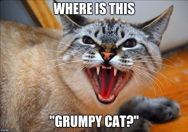 "There is a new Grumpy Cat in town - and he is PISSED!! | WHERE IS THIS ""GRUMPY CAT?"" 