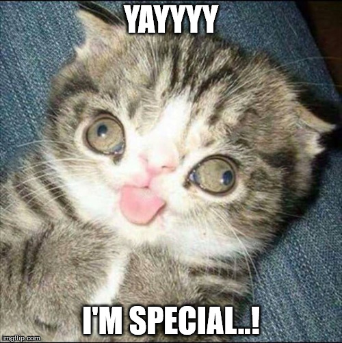 YAYYYY I'M SPECIAL..! | image tagged in derp cat | made w/ Imgflip meme maker