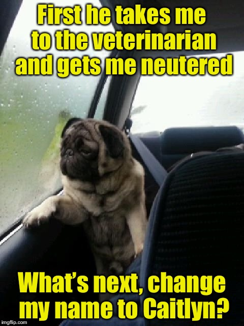 Introspective Pug | First he takes me to the veterinarian and gets me neutered What's next, change my name to Caitlyn? | image tagged in introspective pug | made w/ Imgflip meme maker