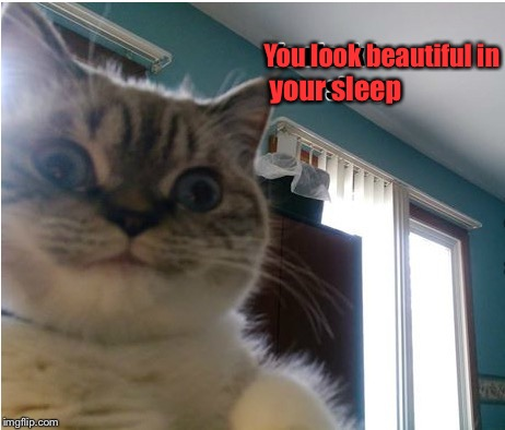 Overly Attached Cat | You look beautiful in your sleep | image tagged in memes,overly attached girlfriend,overly attached girlfriend weekend | made w/ Imgflip meme maker