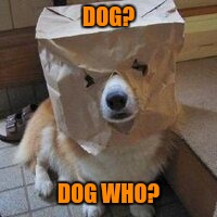 I'm not your dog | DOG? DOG WHO? | image tagged in i'm not your dog | made w/ Imgflip meme maker