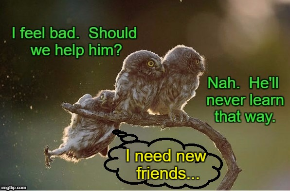 Pretend You Don't See Him | I need new friends... | image tagged in owl,owls,funny owls | made w/ Imgflip meme maker