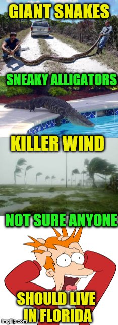 Just heard Florida has some really good real estate deals going on... | GIANT SNAKES SHOULD LIVE IN FLORIDA SNEAKY ALLIGATORS KILLER WIND NOT SURE ANYONE | image tagged in snakes,alligators,hurricanes,dangerous,fry not sure | made w/ Imgflip meme maker