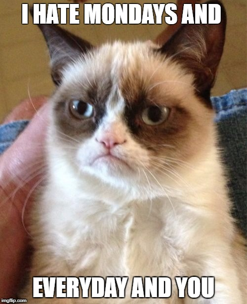 Grumpy Cat Meme | I HATE MONDAYS AND EVERYDAY AND YOU | image tagged in memes,grumpy cat | made w/ Imgflip meme maker