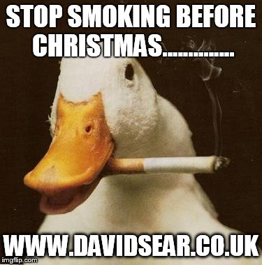 Smoking Duck | STOP SMOKING BEFORE CHRISTMAS.............. WWW.DAVIDSEAR.CO.UK | image tagged in smoking duck | made w/ Imgflip meme maker