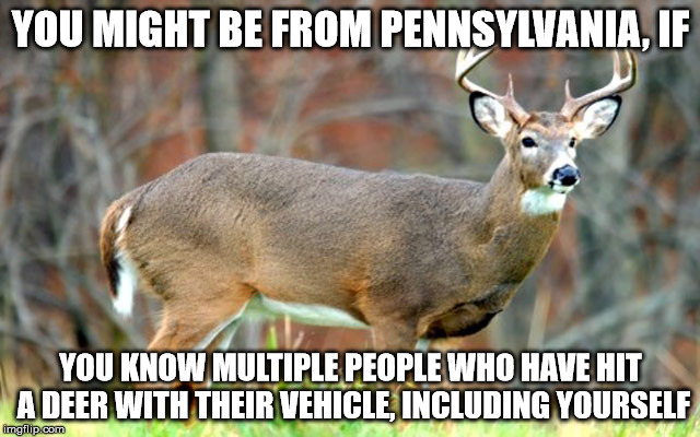 YOU MIGHT BE FROM PENNSYLVANIA, IF YOU KNOW MULTIPLE PEOPLE WHO HAVE HIT A DEER WITH THEIR VEHICLE, INCLUDING YOURSELF | image tagged in pennsylvania | made w/ Imgflip meme maker