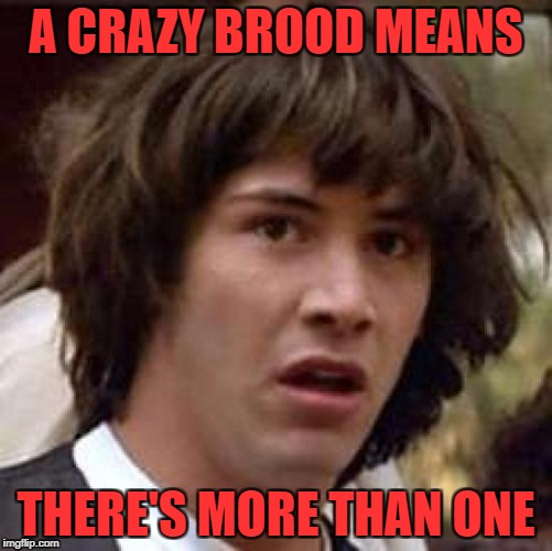 Conspiracy Keanu Meme | A CRAZY BROOD MEANS THERE'S MORE THAN ONE | image tagged in memes,conspiracy keanu | made w/ Imgflip meme maker
