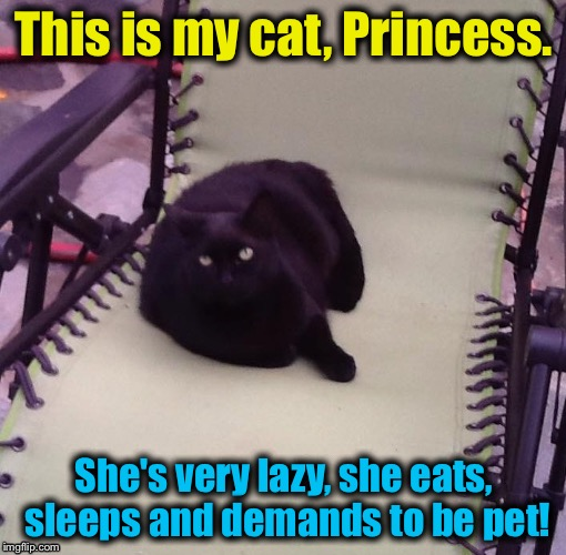 This is my cat, Princess. She's very lazy, she eats, sleeps and demands to be pet! | made w/ Imgflip meme maker