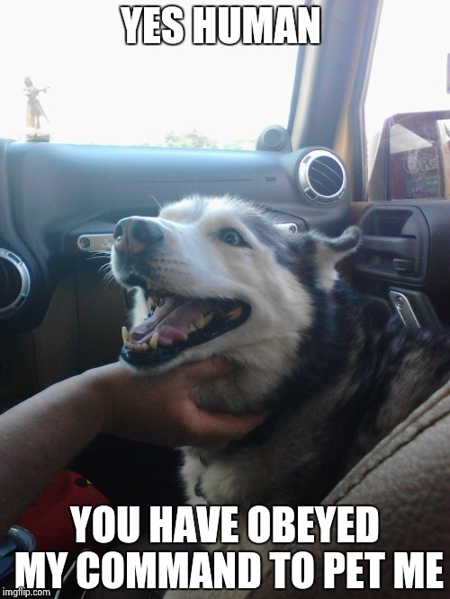 my dog loki | YES HUMAN YOU HAVE OBEYED MY COMMAND TO PET ME | image tagged in my dog loki | made w/ Imgflip meme maker