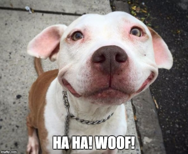 Overly Happy Pitbull | HA HA! WOOF! | image tagged in overly happy pitbull | made w/ Imgflip meme maker