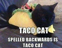 Taco Cat - taC ocaT | . | image tagged in taco cat - tac ocat | made w/ Imgflip meme maker