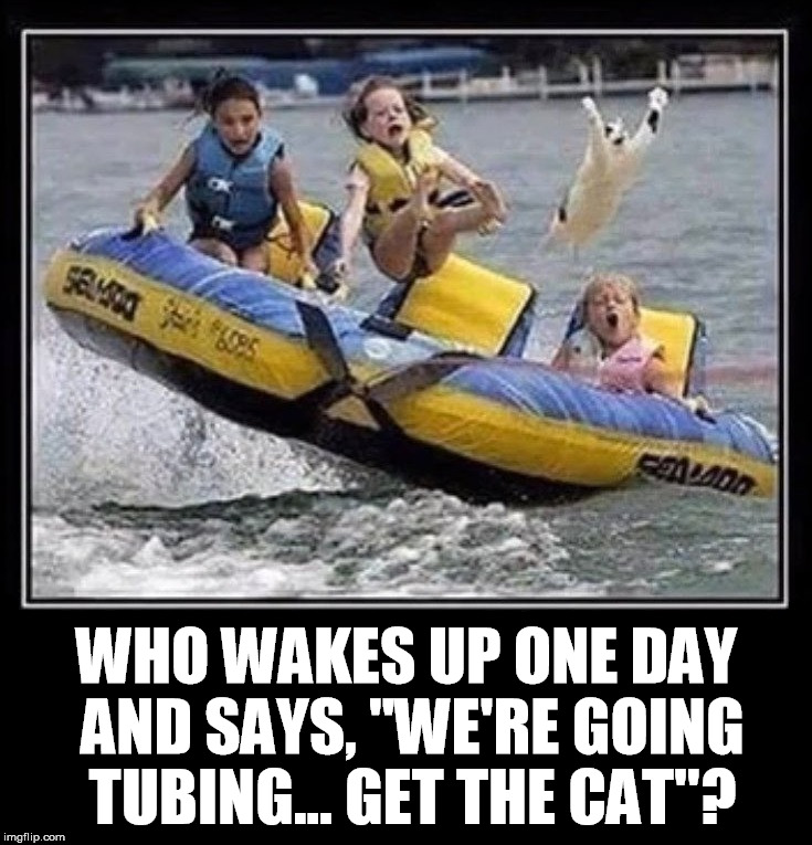 "Tubing cat | WHO WAKES UP ONE DAY AND SAYS, ""WE'RE GOING TUBING... GET THE CAT""? 