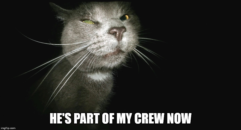 Stalker Cat | HE'S PART OF MY CREW NOW | image tagged in stalker cat | made w/ Imgflip meme maker