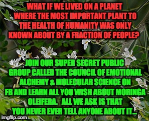 Plant Secrets | WHAT IF WE LIVED ON A PLANET WHERE THE MOST IMPORTANT PLANT TO THE HEALTH OF HUMANITY WAS ONLY KNOWN ABOUT BY A FRACTION OF PEOPLE? JOIN OUR | image tagged in health,plants,nutrition | made w/ Imgflip meme maker