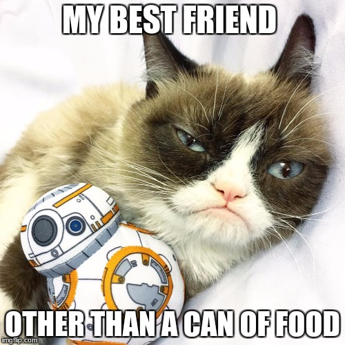 Grumpy Cat Star Wars | MY BEST FRIEND OTHER THAN A CAN OF FOOD | image tagged in grumpy cat star wars | made w/ Imgflip meme maker