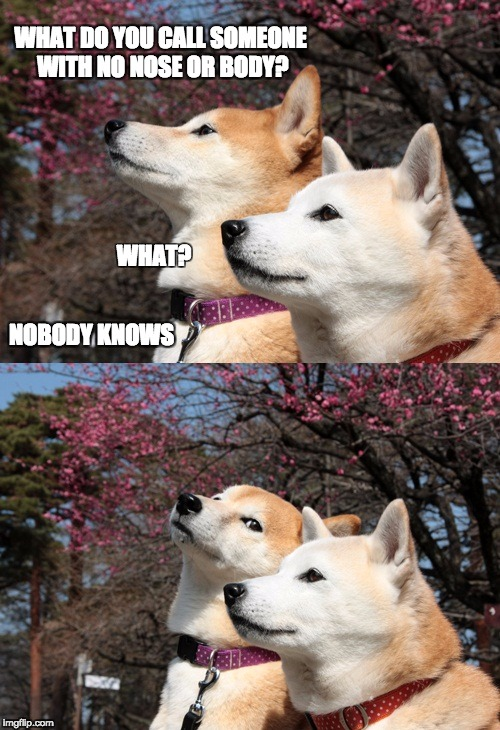 Caninedian | WHAT DO YOU CALL SOMEONE WITH NO NOSE OR BODY? WHAT? NOBODY KNOWS | image tagged in funny dogs,dog joke,bad pun dog | made w/ Imgflip meme maker