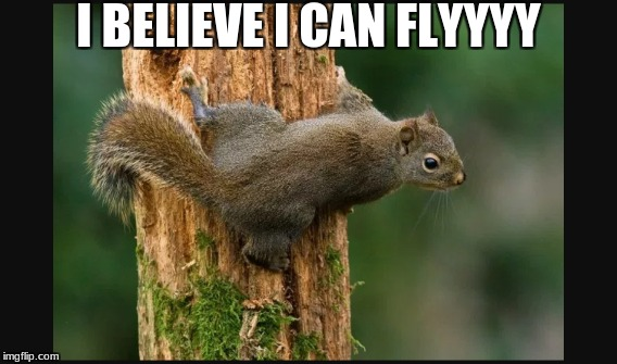 squirrel | I BELIEVE I CAN FLYYYY | image tagged in squirrel | made w/ Imgflip meme maker