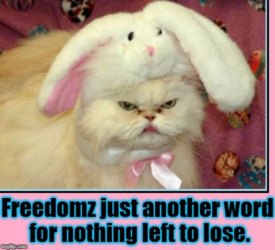 Does it Look Like I Like Costumes? | Freedomz just another word for nothing left to lose. | image tagged in vince vance,cat memes,janis joplin,bobby mcgee,bunny costume on a cat,halloween costumes for cats | made w/ Imgflip meme maker