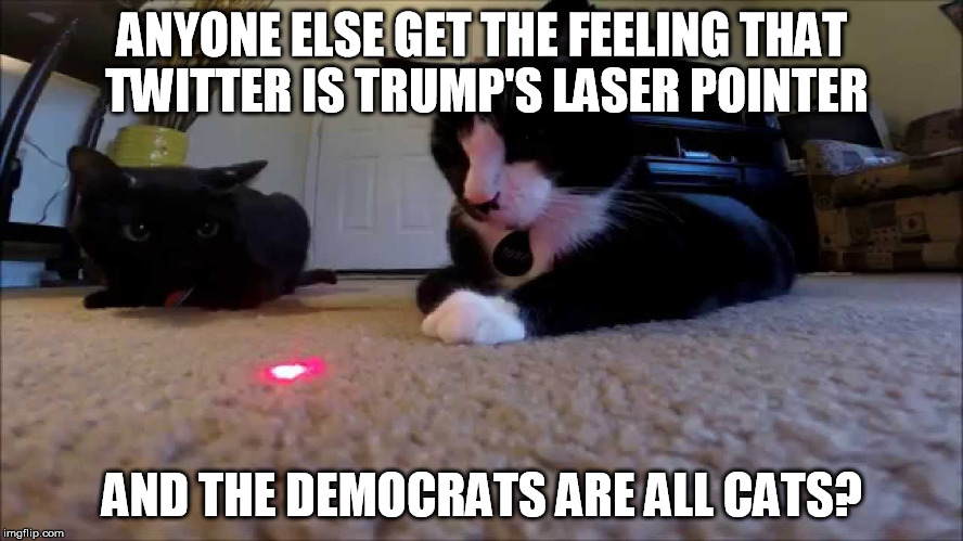 Trump's Laser Pointer | ANYONE ELSE GET THE FEELING THAT TWITTER IS TRUMP'S LASER POINTER AND THE DEMOCRATS ARE ALL CATS? | image tagged in donald trump,democrats,cats,politics | made w/ Imgflip meme maker