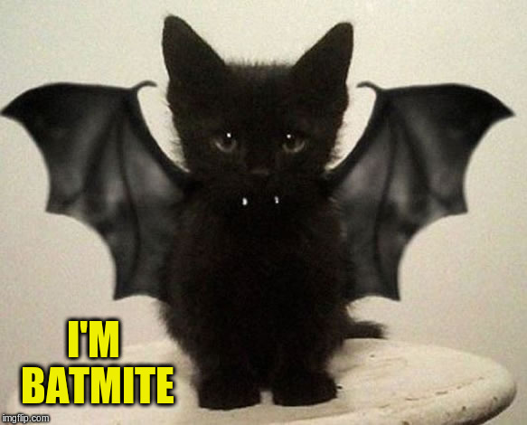 I'M BATMITE | made w/ Imgflip meme maker