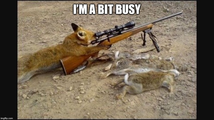 Sniper cat | I'M A BIT BUSY | image tagged in sniper cat | made w/ Imgflip meme maker