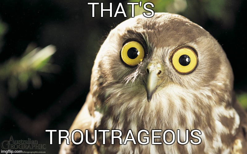 owl | THAT'S TROUTRAGEOUS | image tagged in owl | made w/ Imgflip meme maker