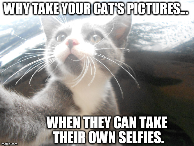 Why take pictures of kittens? | WHY TAKE YOUR CAT'S PICTURES... WHEN THEY CAN TAKE THEIR OWN SELFIES. | image tagged in kittens,cats,funny animals | made w/ Imgflip meme maker