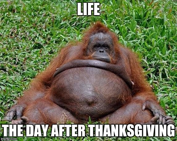 sooooooooooooooooooooooooooooo          true!!!!!!!!!!!!!!!!! | LIFE THE DAY AFTER THANKSGIVING | image tagged in thanksgiving,gorilla,fat,true,day later,tommarow | made w/ Imgflip meme maker