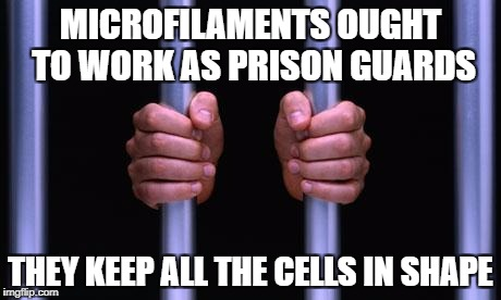 Prison Bars | MICROFILAMENTS OUGHT TO WORK AS PRISON GUARDS THEY KEEP ALL THE CELLS IN SHAPE | image tagged in prison bars | made w/ Imgflip meme maker