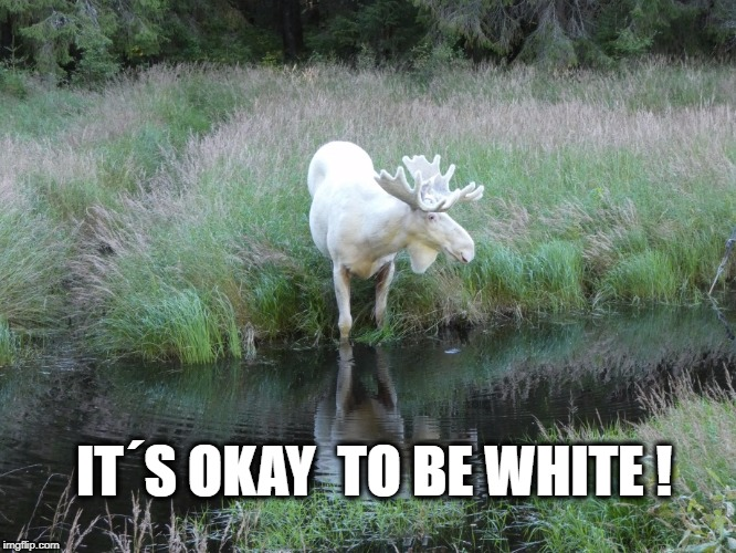 IT´S OKAY  TO BE WHITE ! | image tagged in memes,political meme,political correctness,white privilege | made w/ Imgflip meme maker