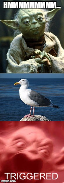 The seagulls | HMMMMMMMMM... | image tagged in yoda,seagulls,triggered | made w/ Imgflip meme maker