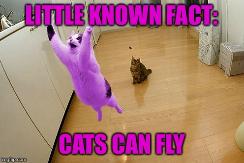 RayCat save the world | LITTLE KNOWN FACT: CATS CAN FLY | image tagged in raycat save the world | made w/ Imgflip meme maker
