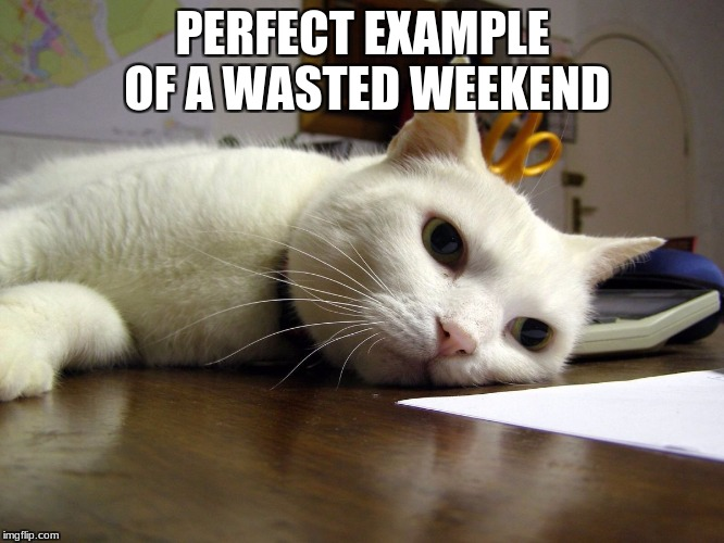 PERFECT EXAMPLE OF A WASTED WEEKEND | image tagged in annoyed tired bored cat | made w/ Imgflip meme maker