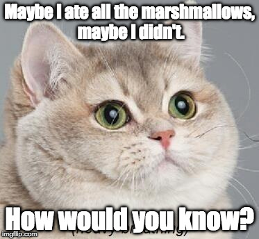 Maybe, Maybe Not | Maybe I ate all the marshmallows, maybe I didn't. How would you know? | image tagged in memes,heavy breathing cat,cat memes | made w/ Imgflip meme maker