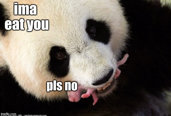 ima eat you pls no | image tagged in panda | made w/ Imgflip meme maker