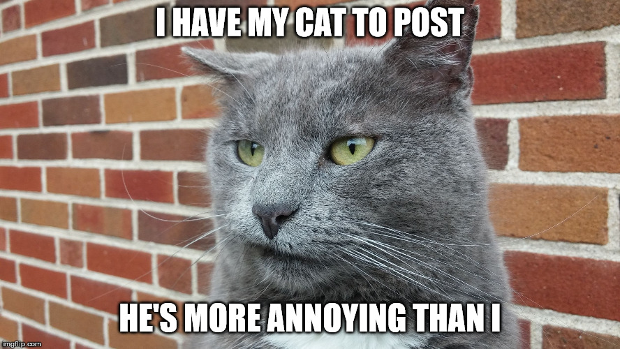 Evil Cat | I HAVE MY CAT TO POST HE'S MORE ANNOYING THAN I | image tagged in evil cat | made w/ Imgflip meme maker