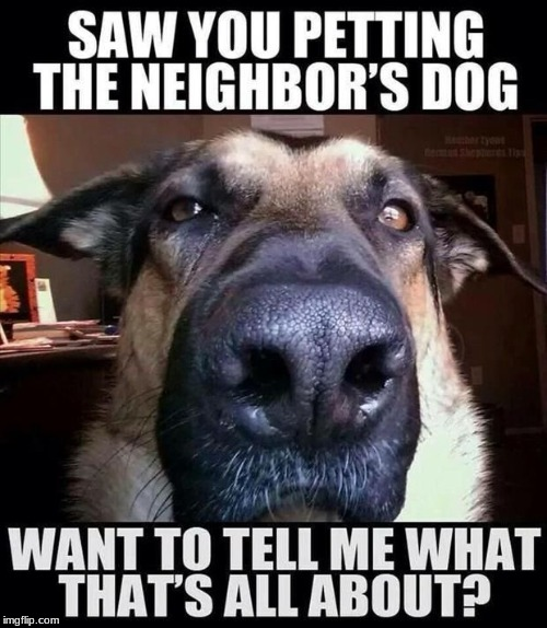 A Sarcastic_For_Days Project! | image tagged in dogs,funny,memes,overly attached girlfriend,neighbor | made w/ Imgflip meme maker