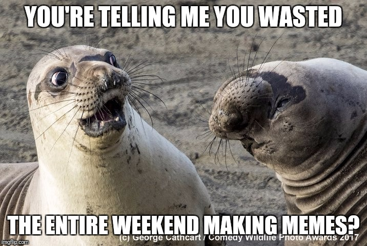 Shocked sea lion wasted the weekend | YOU'RE TELLING ME YOU WASTED THE ENTIRE WEEKEND MAKING MEMES? | image tagged in shocked sea lion | made w/ Imgflip meme maker