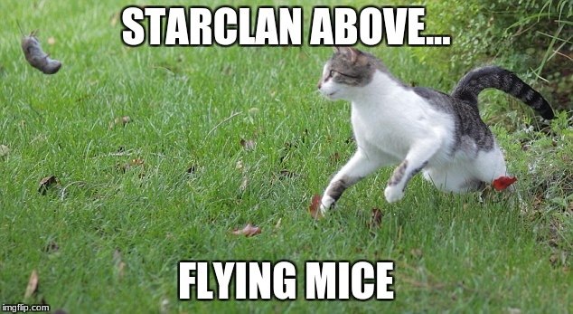 Warrior cat meme | STARCLAN ABOVE... FLYING MICE | image tagged in warrior cat meme | made w/ Imgflip meme maker