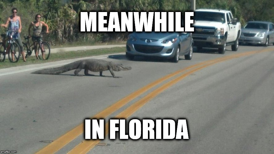 Meanwhile In Florida | MEANWHILE IN FLORIDA | image tagged in meanwhile in florida,gator,florida,alligator,hot,traffic | made w/ Imgflip meme maker