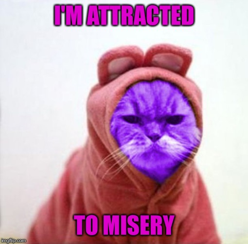 Sullen RayCat | I'M ATTRACTED TO MISERY | image tagged in sullen raycat | made w/ Imgflip meme maker