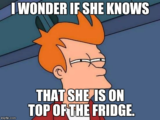 Futurama Fry Meme | I WONDER IF SHE KNOWS THAT SHE  IS ON TOP OF THE FRIDGE. | image tagged in memes,futurama fry | made w/ Imgflip meme maker