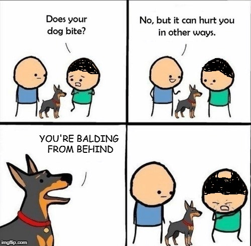 does your dog bite |  YOU'RE BALDING FROM BEHIND | image tagged in does your dog bite,memes,baldness,bald | made w/ Imgflip meme maker