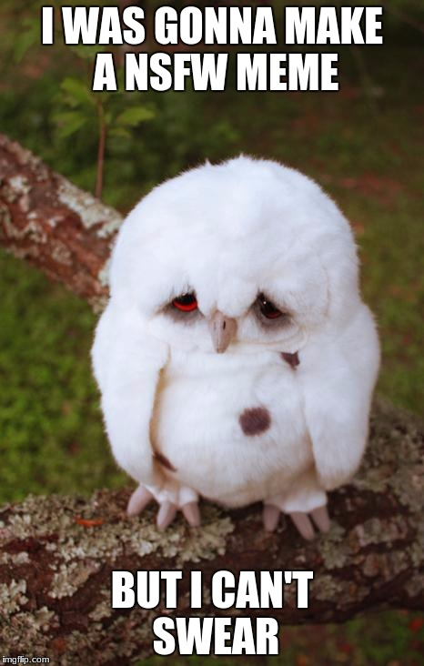 sad owl | I WAS GONNA MAKE A NSFW MEME BUT I CAN'T SWEAR | image tagged in sad owl | made w/ Imgflip meme maker