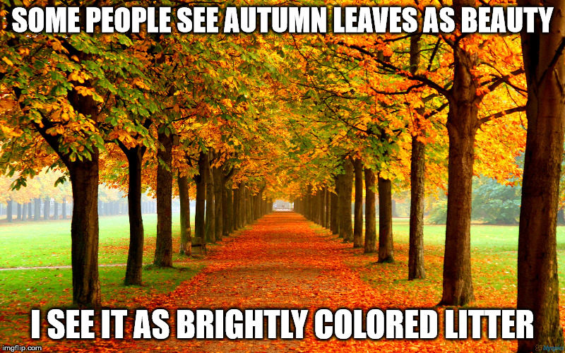 Let's rake this over the coals | SOME PEOPLE SEE AUTUMN LEAVES AS BEAUTY I SEE IT AS BRIGHTLY COLORED LITTER | image tagged in autumn,leaves,beauty,litter,colorful | made w/ Imgflip meme maker